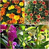 Biocarve Rainy Season Special Flowers-3 Packets