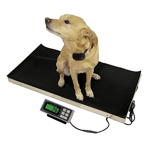 Vet Livestock Pet Veterinary Platform Scale 700 lbs