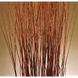 Green Floral Crafts Mahogany Red Asian Willow- 5 Feet Tall, pack of 75