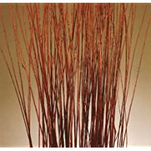 Green Floral Crafts 5 ft Tall Mahogany Red Asian Willow- (Vase Not Included)