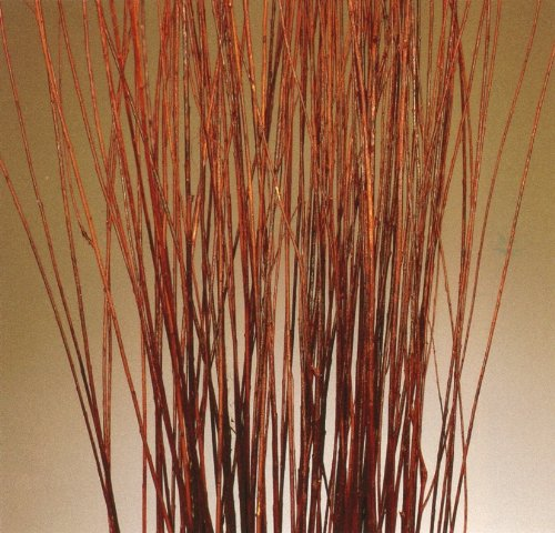 Asian Willow Stems