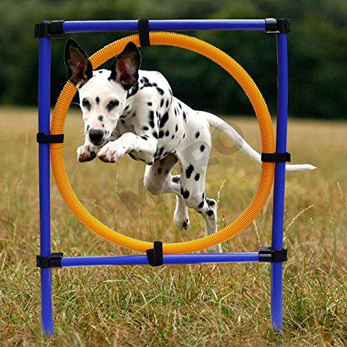 Rugby Dog Agility Show: ZOIC Pet Dogs Outdoor Games Agility Exercise Training