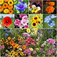 "3,000 Seeds, Wildflower Mixture ""Low Growing"" (20 Species) Seeds By Seed Needs"