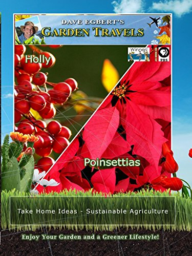 Garden Travels - Holly - Poinsettias