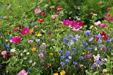 1/2 Pound of Perennial/ Annual Wildflower Seeds Bulk From The Dirty Gardener