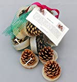 Cinnamon Scented Kindle Cone Firelighters, Natural Pine Cones Infused With Cinnamon Oil. Set of 12 in White. By Hunter Gatherer