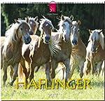 HAFLINGER - Original St�rtz-Kalender...