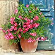 Complete Oleander Collection in 5 Colours