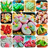 HOO PRODUCTS - 300/bag Mix Succulent Seeds Lotus Lithops Pseudotruncatella Bonsai Plants Seeds For Home & Garden Flower Pots Planters Sementes Brand New !
