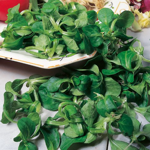 """3G (Approx. 2100) Corn Salad Seeds """"Volhart 3"""" Lambs Lettuce, French Salad, Good For Planters 'Fresh Seeds - Best Before 12.2017!'"""