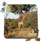 Angelique Cajam Safari Giraffes - South African Giraffe full body view - 10x10 Inch Puzzle (pzl_20125_2)