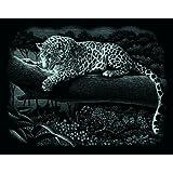 """Mammut 137002 - Kratzbild silber - Leopard, 25,2 x 20 cmvon """"Iden"""""""