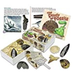 Junior Fossil Collection Box with Stu...