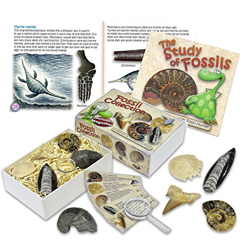 junior-fossil-collection-box-with-study-of-fossils-booklet