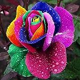 200pcs Coloré Graines De Rose Arc-en-ciel Semer Fleur Plante Jardin Rainbow