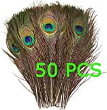Get 50pcs Natural Peacock Tail Feathers (Big Eyed) about 26-30cm image