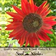 Package of 120 Seeds, Covers 15 Sq Feet - Red Sun Sunflower (Helianthus annuus) Seeds by Seed Needs