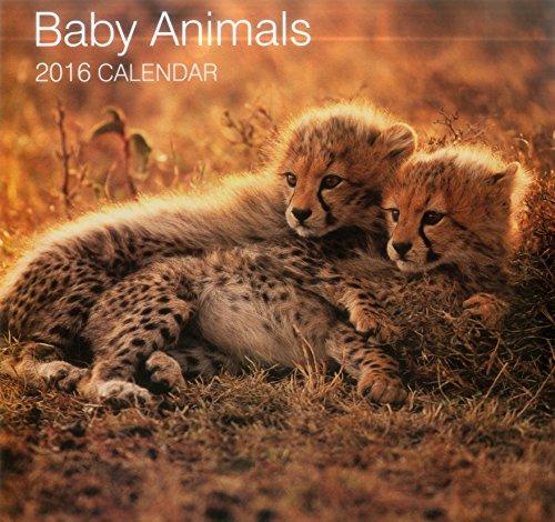 Baby Animals 2016 (Calendars 2016)