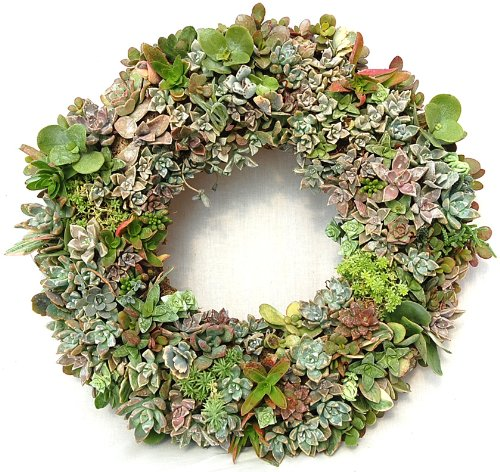 11 Wire Wreath Frame Round Living Wreath Form Case Of