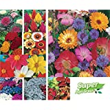 SPECIAL FLOWER SEEDS COMBO 15 MAJOR/MAIN PACKETS SOLD BY SUPER AGRI GREEN (AVG 50+ SEEDS EACH)HYBRID TYPE FLOWER...