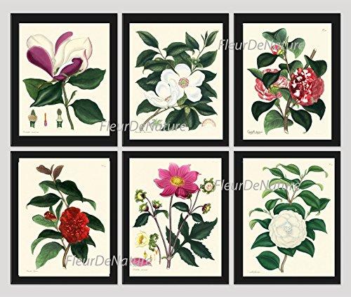 flower-print-set-of-6-antique-botanical-beautiful-magnolia-pink-red-white-camellia-garden-nature-pla