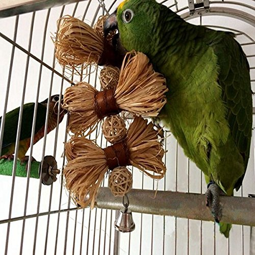 Bargain world pet parrot sittich nymphensittich