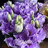 Best-Selling!Purple Eustoma Seeds Perennial Flowering Plants Lisianthus Multicolor For DIY Home Garden,100 PCS...