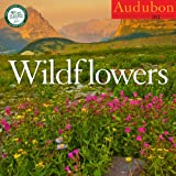 AUDUBON WILDFLOWERS CALENDAR 2013