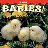 Barn Babies!