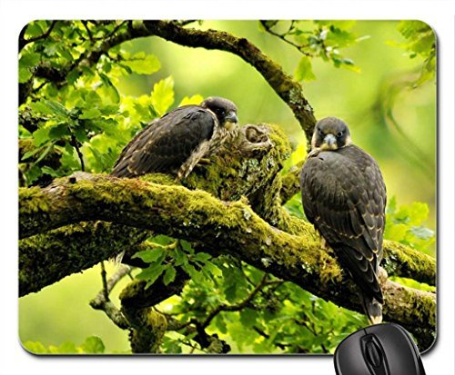 falcons-mouse-pad-mousepad-birds-mouse-pad