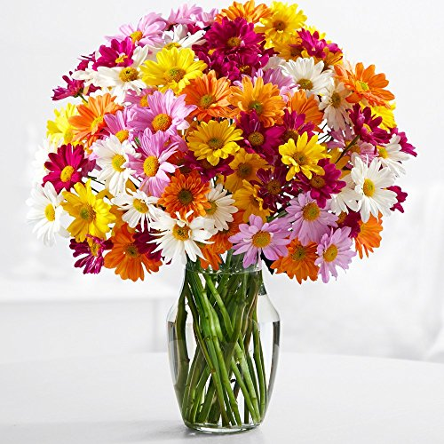 proflowers-20-count-multi-colored-100-blooms-of-poms-with-glass-vase-w-free-vase-flowers