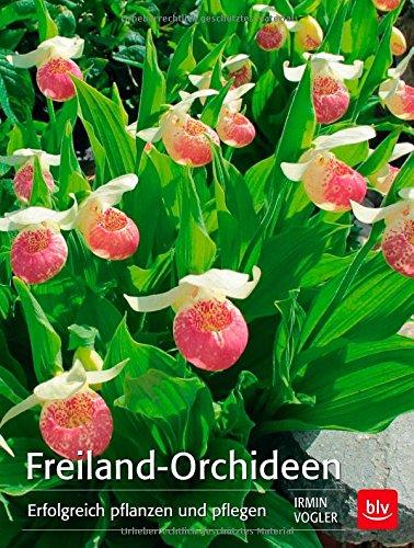 frauenschuh orchidee storeamore. Black Bedroom Furniture Sets. Home Design Ideas
