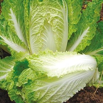 Suttons seeds 155085 155085 hilton graines de for Conception jardin chinois