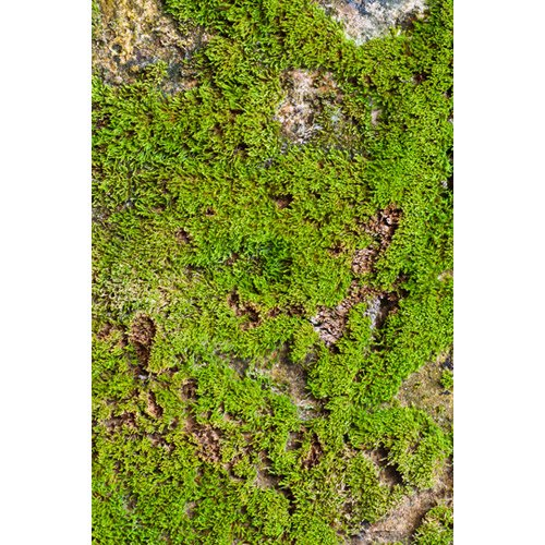 Photography Faux moss stone Floor Drop Background Mat CF680 Rubber Backing, 4'x5' High Quality Printing, Roll up for Easy Storage Photo Prop Carpet Mat (Can also Be Used for Decorating Home or patio)