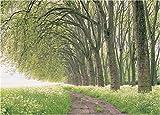 2000ピース 新緑の木立ち-ベルサイユ 19-020