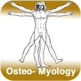 Anatomy - Knochen-Muskellehre - Teil 3