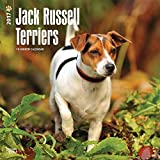 Jack Russell Terriers (International Edition) 2017 Square