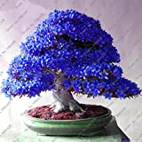 100 Pcs / Bag Rare Bonsai 13 Varieties Of Azalea DIY Home And Garden Seed Plants Of Japanese Sakura Flowers