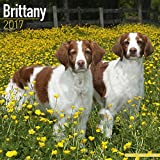 Brittany Calendar 2017 - Brittany Spaniel - Dog Breed Calendars - 2016 - 2017 wall calendars - 16 Month by Avonside