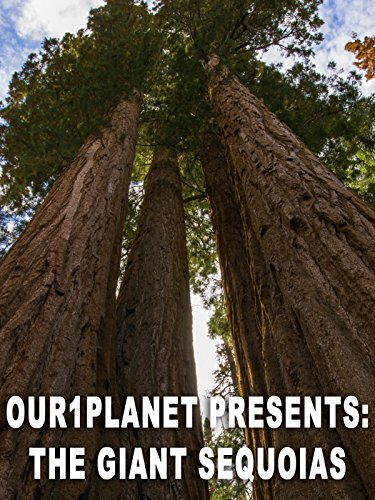 Our1Planet Presents: The Giant Sequoias