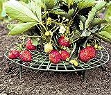 Erdbeer-Reifen (10 St�ck)