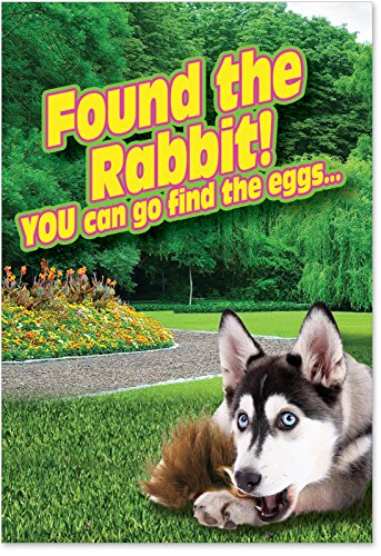 NobleWorks-0018-Found-The-Rabbit-Funny-Easter-Unique-Greeting-Card-5-x-7