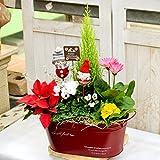 花由 クリスマスの寄せ植え クリスマスガーデン 【5日後以降で日付指定】(フラワーギフト クリスマスプレゼント クリスマスギフト 鉢植え 鉢花 花鉢)