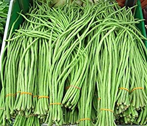 Asparagus Bean 25 Seeds - Delicious Nutty Flavor