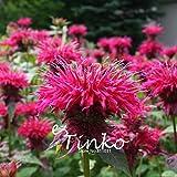 100pcs Bee Balm Seeds Monarda Citriodora Purple Horsemint Seeds Flower Bonsai Plant DIY Home Garden Free Shipping