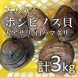 ホンビノス貝 大アサリ 白ハマグリ 白蛤 中 約3kg(築地直送)愛知/千葉 他