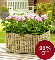 Collapsible Flowering Basket