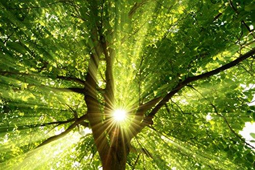 Infrarotheizung-Raufaser-Vital-rahmenlos-mit-Bild-810-Watt-Motiv-Sonnenstrahlen