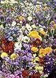 Tropica - Wildblumen - Südfrankreich - Farben der Provence (27 Sorten) - 1000 Samen