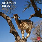 Goats In Trees 2013 Square 12X12 Wall...